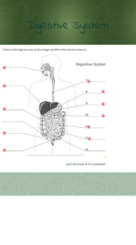 wizerme blended worksheet digestive system digestive