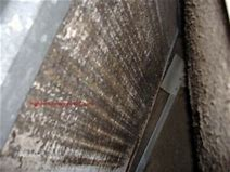 Image result for mold in ac units