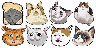 Funny Cats Cursor Custom Memes Internet
