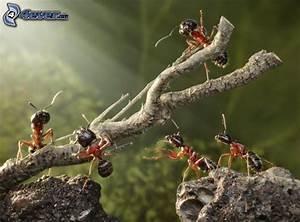 Was Essen Ameisen : ameisen ~ Lizthompson.info Haus und Dekorationen