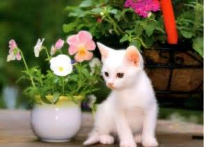 are tulips poisonous to cats poisonous flowers for cats flowers magazine