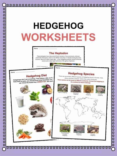 hedgehog facts worksheets habitat species diet  kids