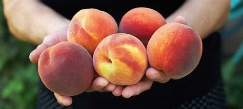 Aloha Organic Fruit Palisade Peaches