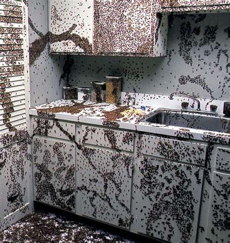 Blatte Rosse Volanti Blatte E Scarafaggi In Cucina Agisci Prima Sia Troppo