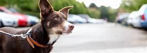 Dog Care Advice Tips Health Information RSPCA