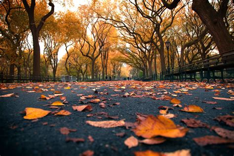Fall Desktop Backgrounds New York by The Yellow Brick Road United States New York New York
