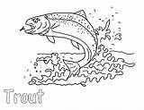 Trout Coloring Pages Apache Eat Insect sketch template