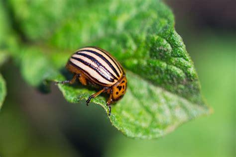 garden insect pest identification websites