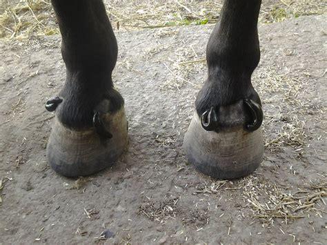 pferdegesundheitstrainer stefanie brandt rehatraining