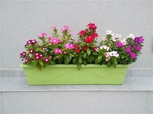 Balkonkasten Bepflanzen Südseite : balkonkasten im schatten diese pflanzen gedeihen ohne sonne ~ Indierocktalk.com Haus und Dekorationen
