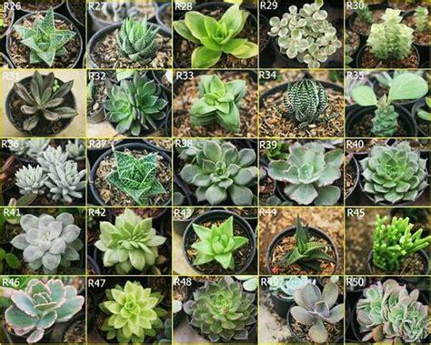jual hiasan cafe tanaman hias kaktus mini sukulen