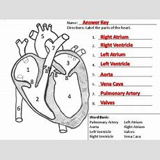 Label The Heart Worksheet By Alexis Forgit  Teachers Pay Teachers