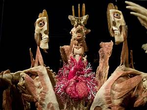 Body Worlds & The Story of the Heart | The original Body ...