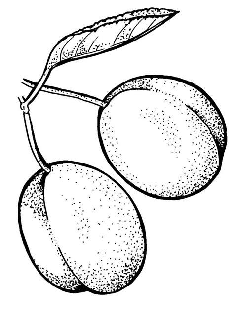 coloriages  imprimer prune numero