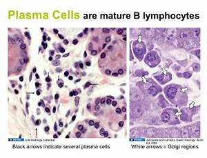 02.16.09: Lymphatic Histology