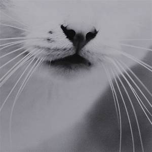 black &, white, black and white, cat, photography, - image ...