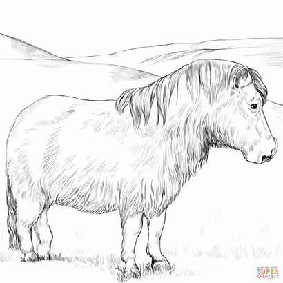 Pony Coloring Welsh Horse Shetland Ausmalbild Zum
