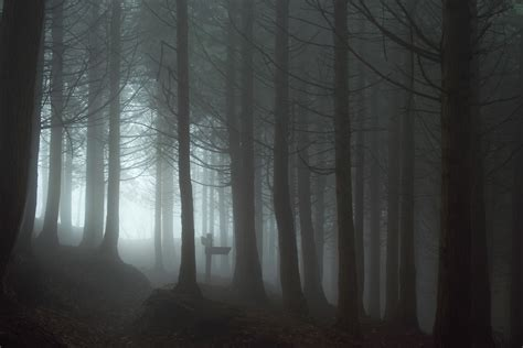Spooky Wallpaper For by Forest Mist Spooky Wallpapers Hd Desktop And Mobile