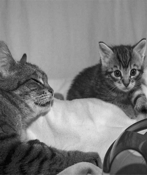 Katze Hat Ständig Durchfall