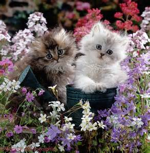 Cats and Kittens with Flowers