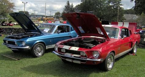 Gt500 Vs Gt350 by Rip Carroll Shelby S Greatest Hits