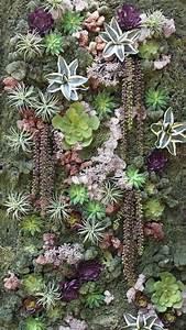 Vertikale Gärten Selber Machen : pflanzen succulents pinterest pflanzen vertikal und g rten ~ Bigdaddyawards.com Haus und Dekorationen
