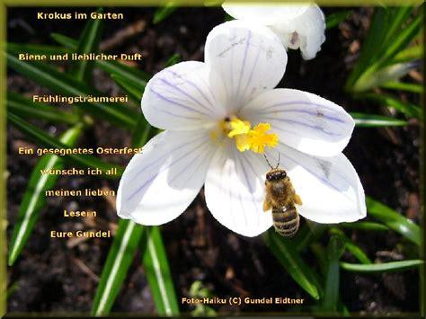 Der Garten Gedicht by Gedicht Krokus Im Garten Edelgunde Eidtner Bei E