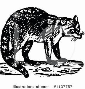 Raccoon Clipart #1137757 - Illustration by Prawny Vintage