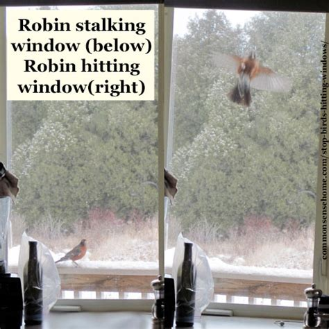 stop birds hitting windows 5 tips to keep our feather