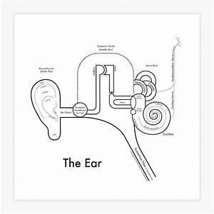 The Ear Diagram Print