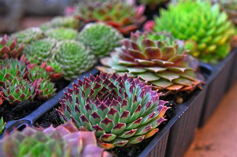 Free Images : green, nature, background, leaves, plant, garden, autumn, flower, succulent ...