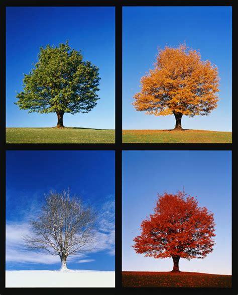 Four Seasons Songs For Kids