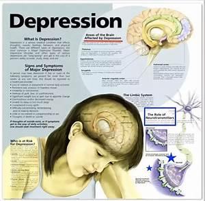 Does Depression Cause Permanent Brain Damage  I U0026 39 Ve Been