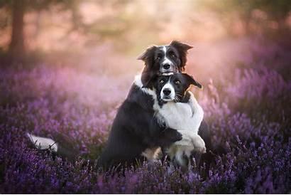 Border Collie Dogs Hug Dog Animals Hugging