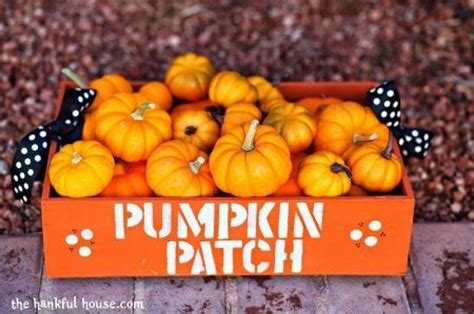 Pumpkin Patch Near Spring Tx by Best Pumpkin Patches In Houston Axs
