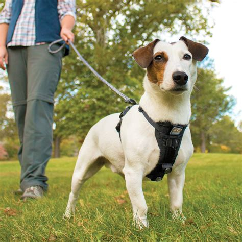 harnesses  dogs  pull   dog effect
