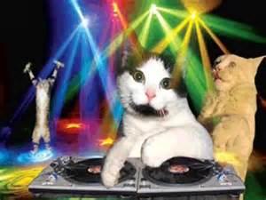 cat dj dj cat quot cat disco quot trailer