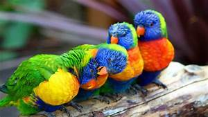 Cute Colorful Parrot Wallpapers Hd : Wallpapers13.com