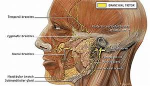 Dental  Facial Pain  Posture Connection