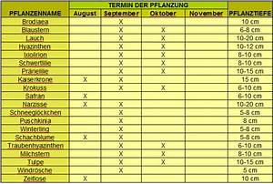 Welche Pflanzen Vertragen Sich Tabelle : blumenzwiebeln pflanzen blumenzwiebeln pflanzen in garten ~ Lizthompson.info Haus und Dekorationen