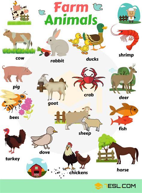 Domestic Animals   Farm Animals   Useful List & Great ...