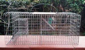 gabbia trappola per cardellini gabbia trappola animali posot class