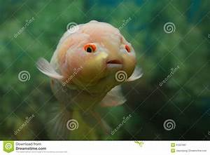 Cute Fish Royalty Free Stock Photography - Image: 31057997