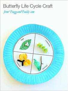 Butterfly Life Cycle Paper Plate Craft - Buggy and Buddy