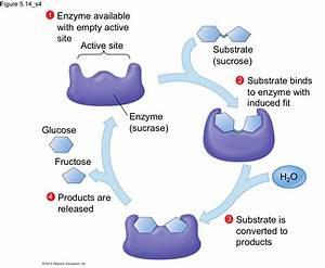 Bio 214 Study Guide  2012-13 Freymiller