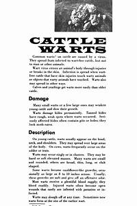 Cattle Warts  - Page 2