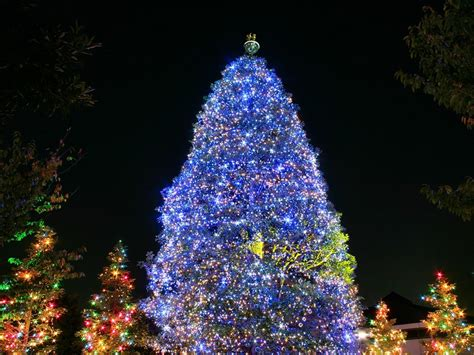 19 days until christmas beautiful christmas trees legendary post