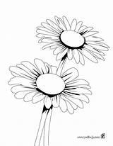 Colorear Dibujo Linea Imprimir Margaritas sketch template