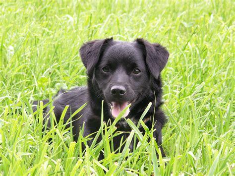 Tieranzeigen Mischlingshund Kleinanzeigen