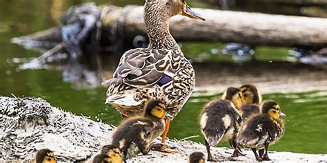 leadership nature  nurture